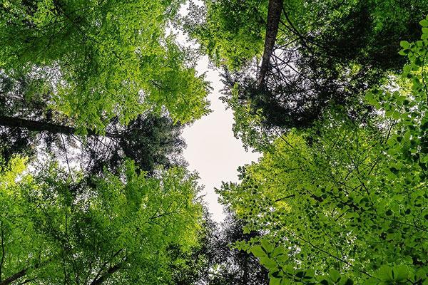 Wald von unten